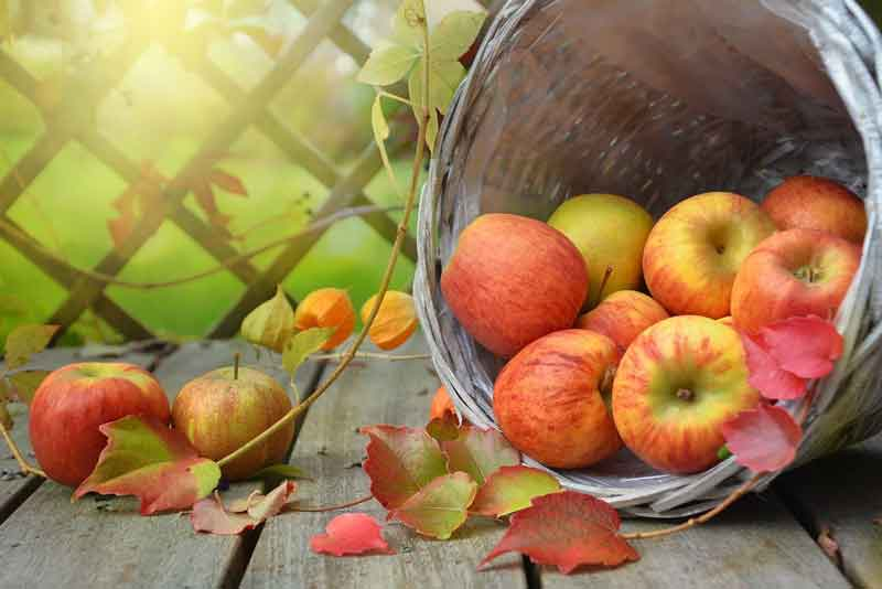 apples-1776744_1280
