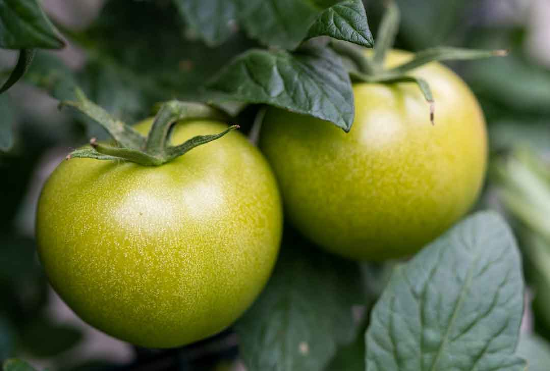 tomatoes-5377571_1080